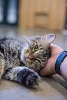 Shagly Nassau Humane Society-149-(ZF-741