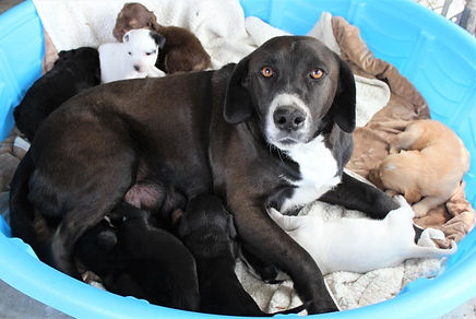 Mom and Puppies.JPG