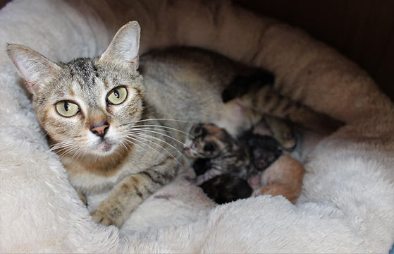 Mom and Kittens.JPG