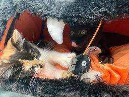 Halloween Kittens.jpg