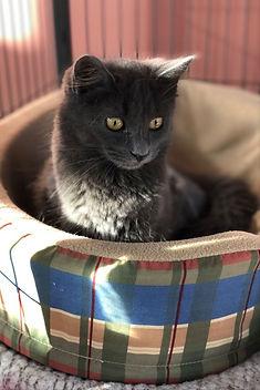 Grey Kitten.jpg