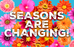 Lenas - Season are Changing - website.pn