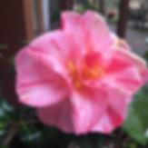 Linda%20Momoji-no-higurashi_edited.jpg