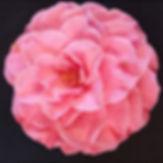 Martha In the Pink.jpg
