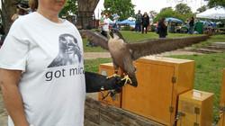 OCED 2016 Peregrine Falcon