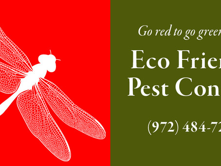 Low-Impact Insect Control: An Interview with Lin Ellis of Eco Friends Pest Control