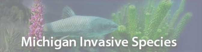 bannerInvasives1_450556_7_edited_edited.png