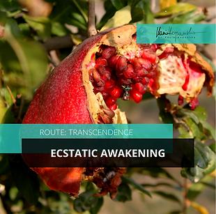 Transcendence-Ecstatic-Awakening.png