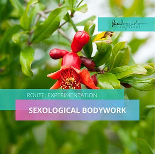 Sexological-Bodywork-1.png