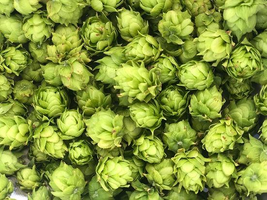 Bed of hops