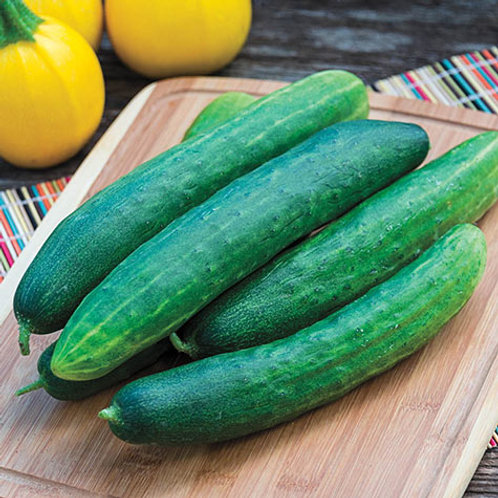 Cucumbers from field