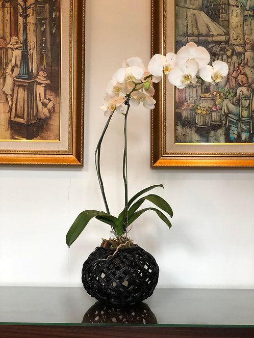 Tinali Orchid Black Planter only