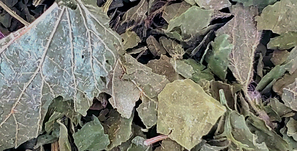 Organic Stinging Nettle Seeds