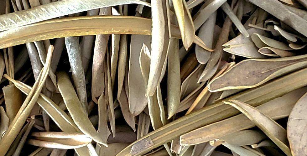 Organic Olive leaf