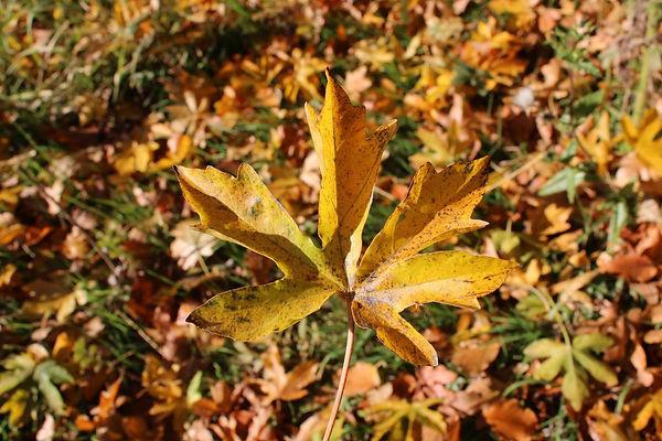 food-blog-photography-nature-autumn-sian