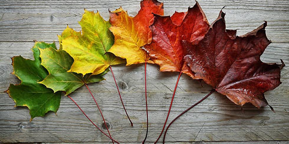 27 November 2021: The Changing Seasons