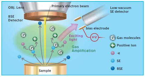 TM4000_Technical Image.JPG