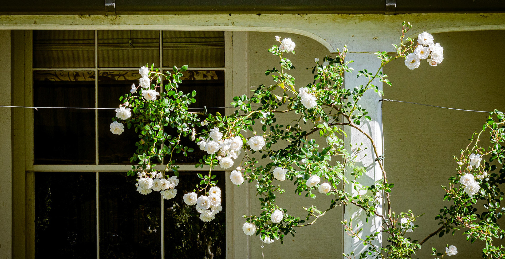 Roses on the Verandah
