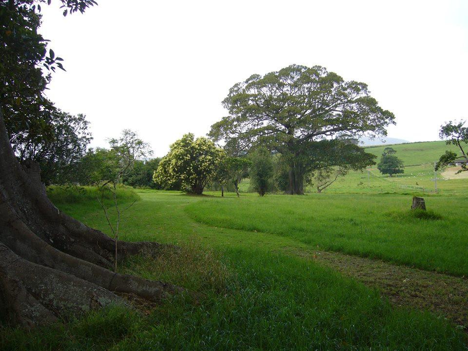 Woodland walk.jpg