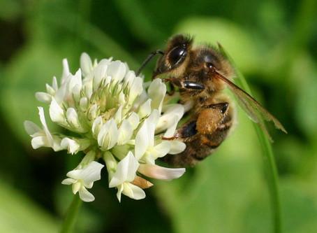 Nos ruches en ce début d'été, sur notre terroir du Bessin