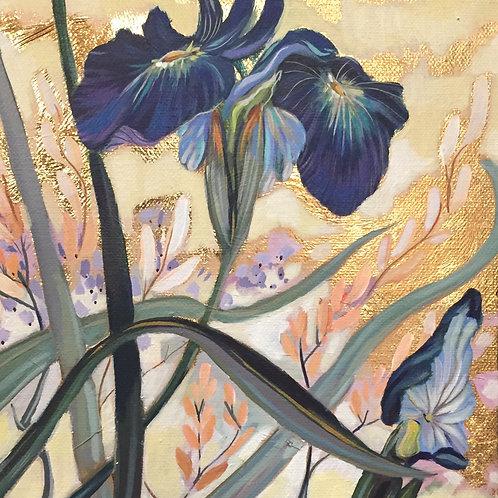 Iris- Sold