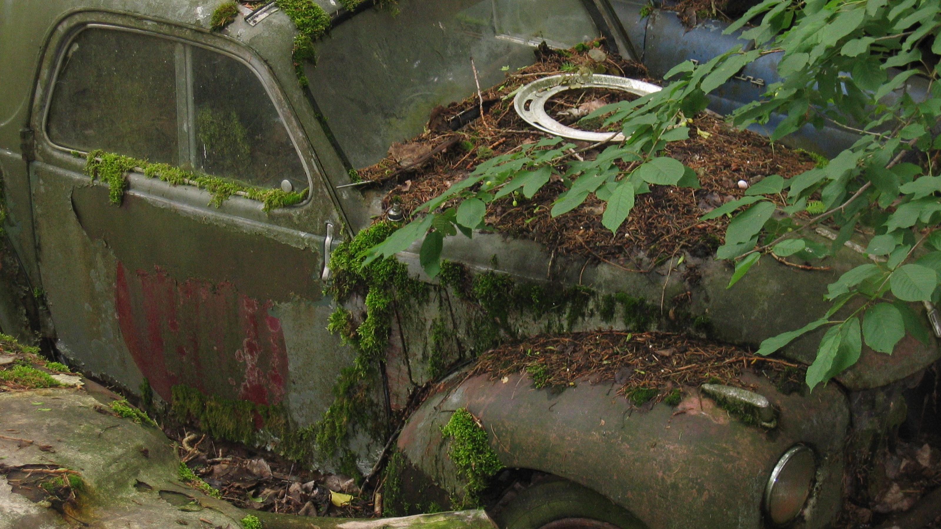 Autofriedhof Kaufdorf 034