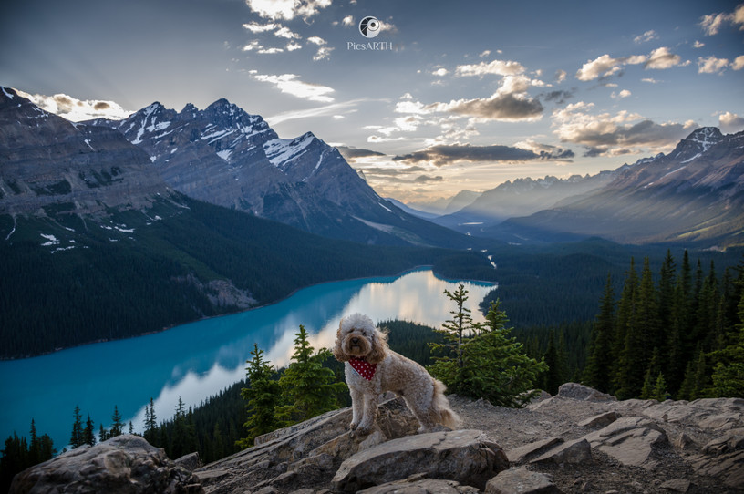 Peyto lake with my pup, Simba