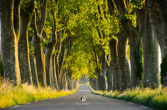 Tree lined roads, Provence, France