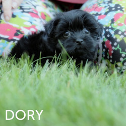 DORY4