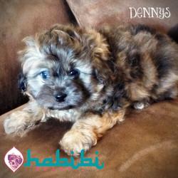 Dennys- Boy