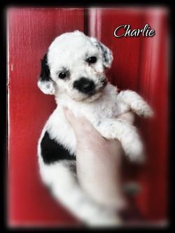 Charlie--Girl--1800