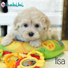 l-ilsa3.jpg