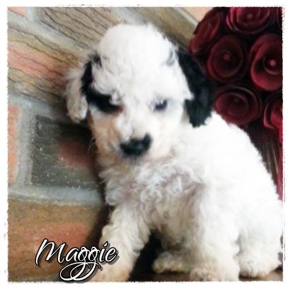 Maggie--1800