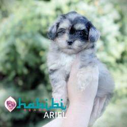 ARIEL33