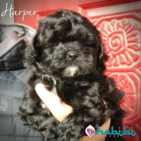 Harper-Girl-I'm Adopted