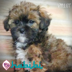 Violet- Girl - $2100