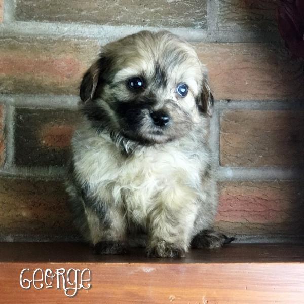 George -Apricot Sable Confetti Boy