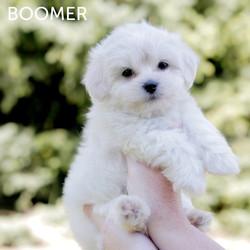 BOOMER7