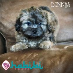 Dennys-Boy