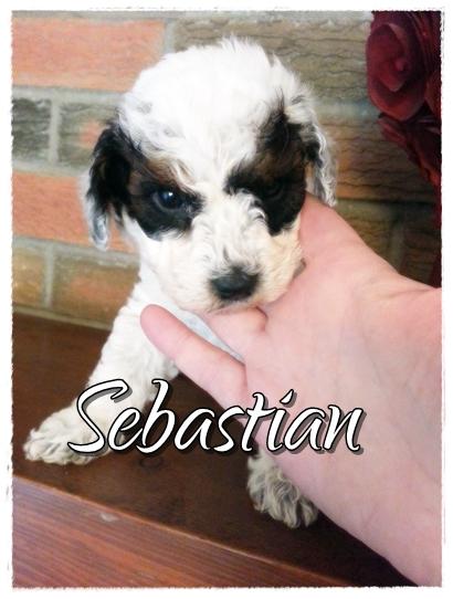 Sebastian--1800