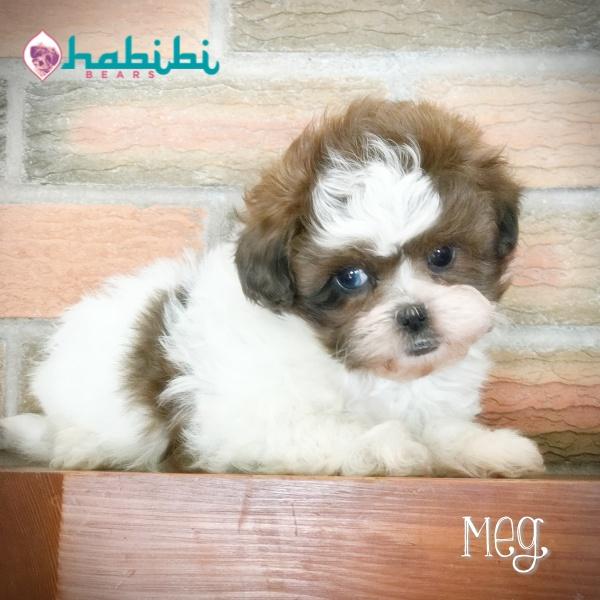Meg- Girl