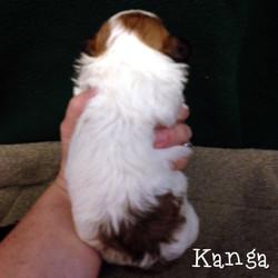 Kanga's Back