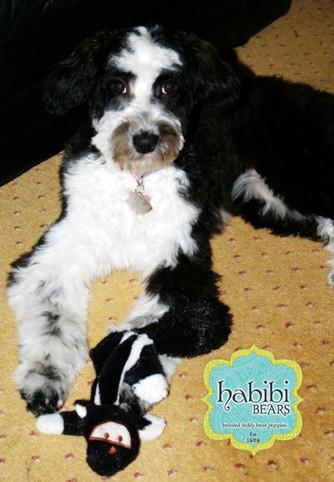 Meet Sophie: Standard Panda Habibi Bear