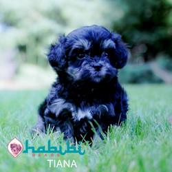 TIANA3