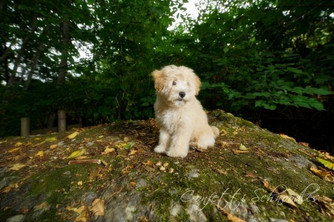 Meet Parker: Apricot Confetti Habibi Bear