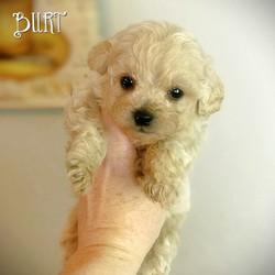 Burt -Apricot Confetti Boy