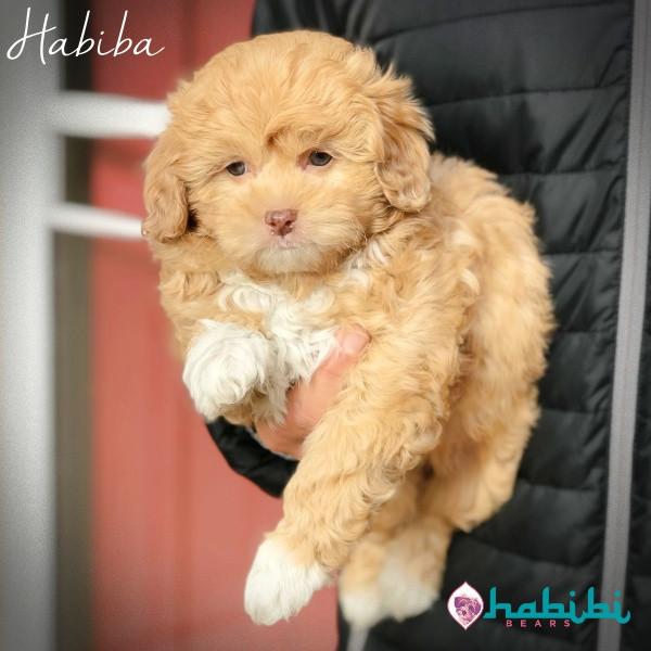 Habiba-Girl-I'm Adopted
