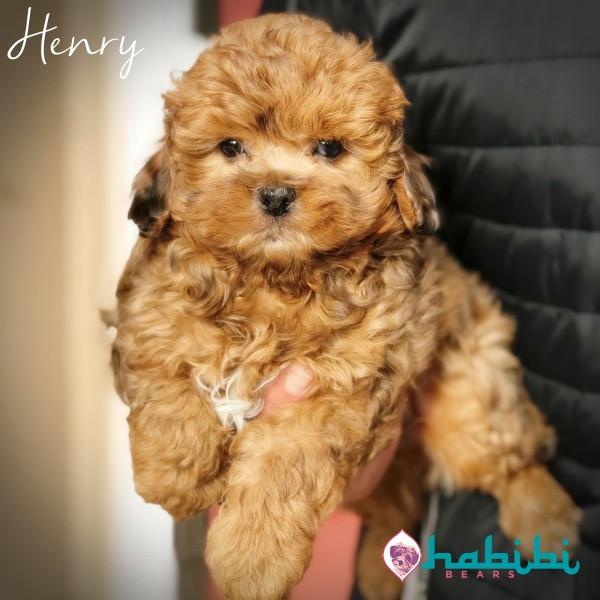 Henry-Boy-I'm Adopted