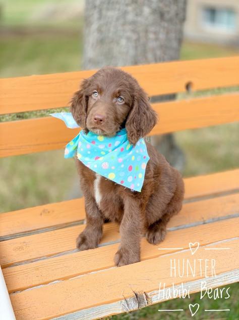 Hunter - Boy- I'm Available!