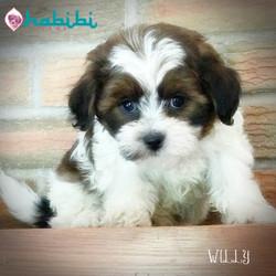 Willy- Boy $2100